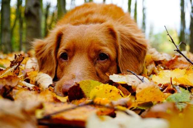 『秋になって抜け毛がひどいのはなぜ?』不安を解消するお手入れ術の表紙